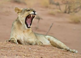 Big Yawn by MorkelErasmus