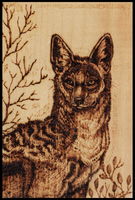 Jackal Wood Burning by MorRokko