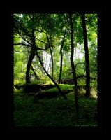 Enchanted Forest by angelicque