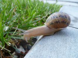 Snail 2 by Meow-Stock