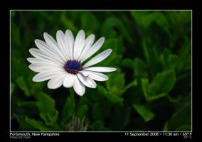 White Ring of Life by PhotographyByIsh