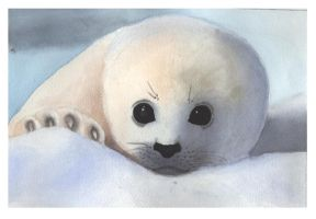 Watercolor - Baby Seal by popished