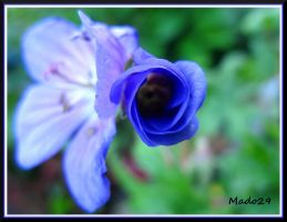 Bud Blue by Mado29