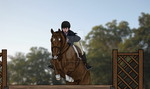 Kenny-Working Hunter by tupelo-designs