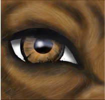 Wolf Eye by H0wlingSheWolf