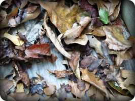 the scattered leaves of autumn. by x--photographygirl