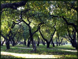Apple orchard. by VeIra-girl