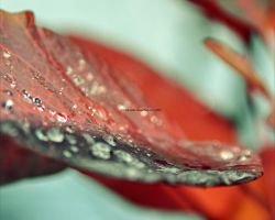 Autumn drops by Holunder