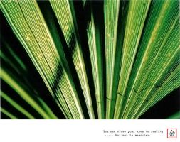 Analogue : Green Vibes by gizmo17
