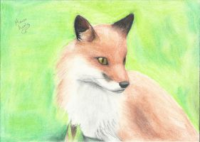 red fox in paper by aureliomarcos