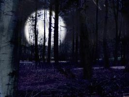 Moonlight at Hardwick Park by reverendh