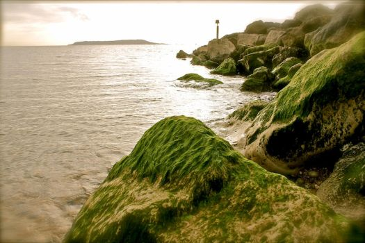 Seaweed and fading light by muzzy500