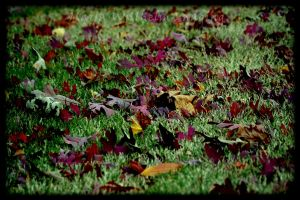 The Autumn Leaves by MariaWillhelm