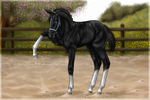 Wannabe Dressage Champion by Tigra1988