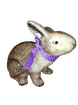 Easter Rabbit 2 Png by Irisustockimages