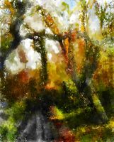 Dreamy Forest by Pendragon1951