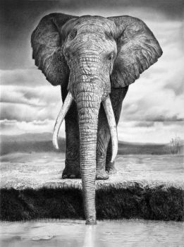 elephant by francoclun