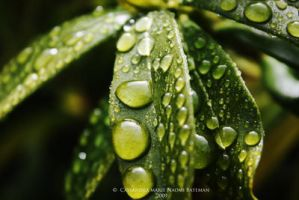 Morning Dew Drops by Mocca-Coffee