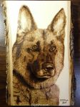 German Shepherd - Wood burning by brandojones