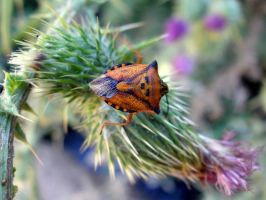 Heteroptera III by LetoCrows