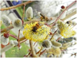 Bees at work by moonik9