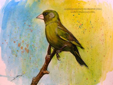 European Greenfinch by AmBr0