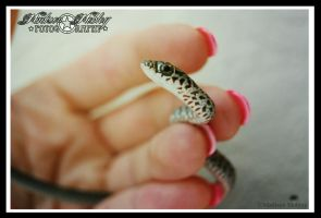 Grey Rat Snake by Maddiepantz