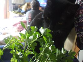 Holly and Parsley. by Teelia