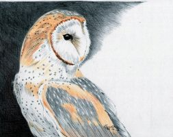 Pen Barn Owl by Cindy-R