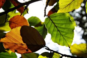 Autumn by ColdWinter97