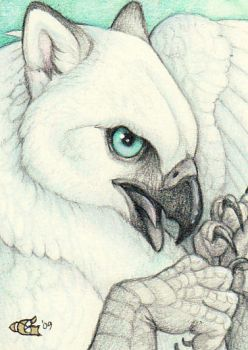 Shimmerhawk - ACEO by Goldenwolf