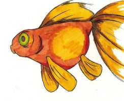 Goldfish by Gastric