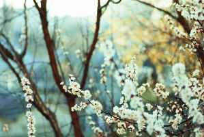 Spring is coming by 5-G