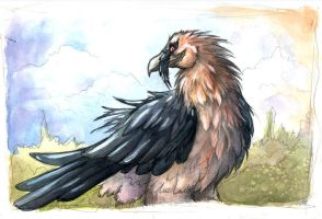 Bearded Vulture by sebastiangreyfox