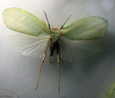 Flying Insect2 by NHuval-stock