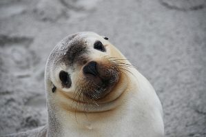 Seal I by Chacalxxx