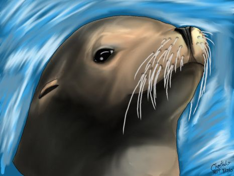 Sea Lion by cheetahpelt