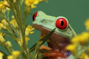 Smelling Flowers by SnowPoring