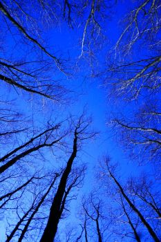 Woodland Sky View by vickychica
