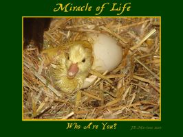 MIracle of Life 5 by dragonpyper