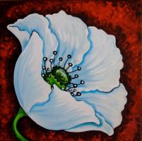 White poppy by oliecannoligriffard
