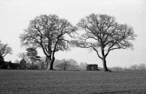 Two Trees at Dawn by Nigel-Kell