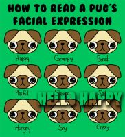 The many facial expressions of a pug by hellohappycrafts