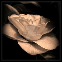 A Rose By Any Other Name by Dawns-Envy