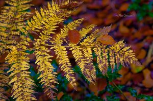 Fall ground-cover (II). by Phototubby