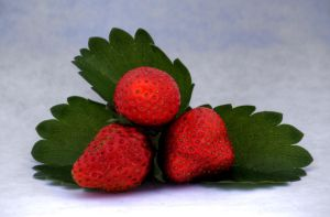 Strawberry lightbox study HDR by chris-stahl