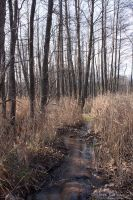 Woods and Brooks 20 by rici66