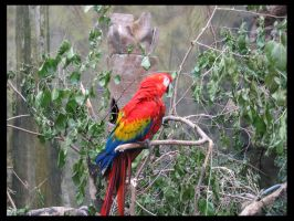 Macaw by loathsome-weasel