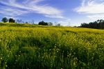 Scenes from a Spring Field by JoeBostonPhotography