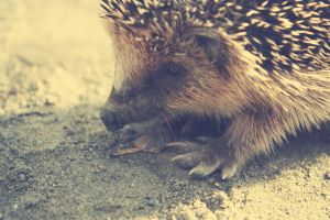 hedgehog baby 2 by Emiliee91